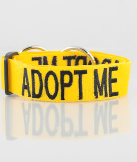 Adopt Me Dog Collar (yellow)