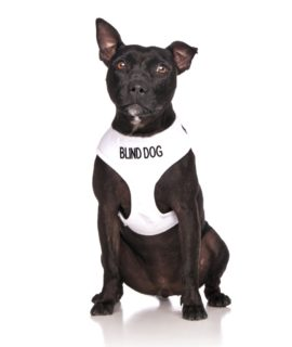 Blind Dog Vest (white)