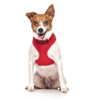 Caution Dog Vest (red)