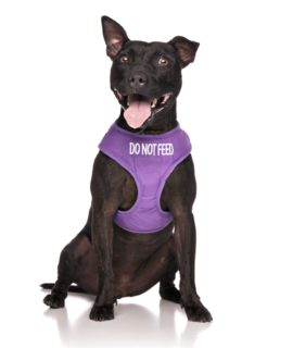 Do Not Feed Me Dog Vest (purple)