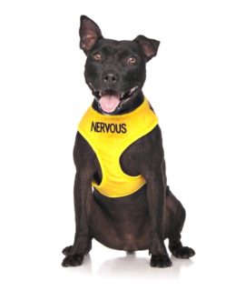 Nervous Dog Vest (yellow)
