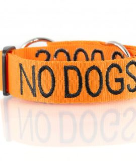 No Dogs Dog Collar (orange)