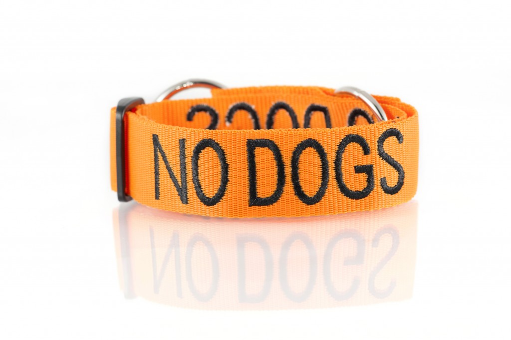 no dogs collar