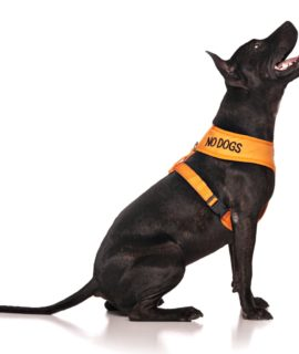 No Dogs Vest (orange)