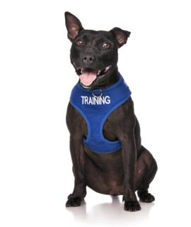 Training Vest Black Dog