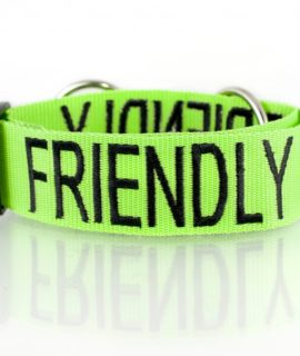 Friendly Dog Collar (green)