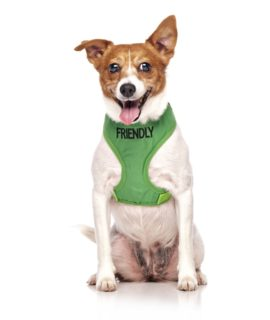 Friendly Dog Vest (green)