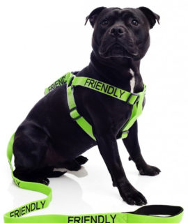 Friendly Dog Strap Harness (green)