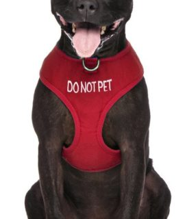 Do Not Pet Dog Vest (red)