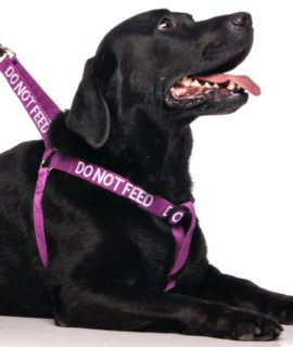 Do Not Feed Strap Harness (purple)